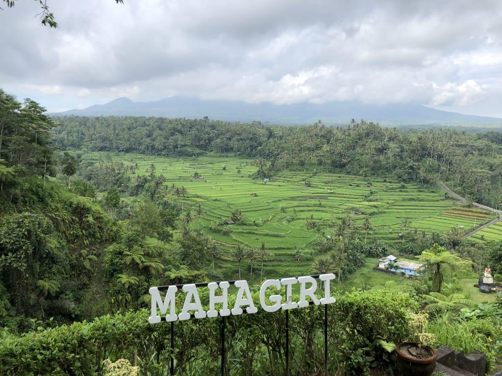 Pemandangan sawah dari Restoran Mahagiri
